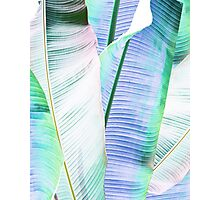 Tropical leaves Photographic Print