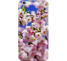 Beautiful pink flowers of cherry on blue sky background, april in France iPhone Case/Skin