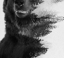 bear graphic nature photography Sticker