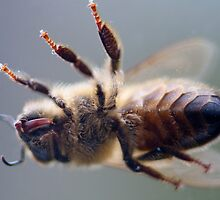 Worker bee up close and VERY personal by Martyn Franklin