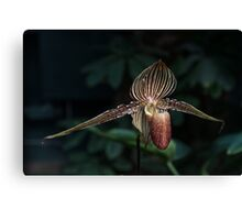 Exotic Dark Beauty in Stripes Canvas Print