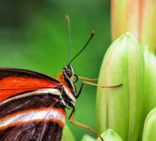 striped butterfly Sticker