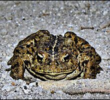 Smiley The Frog  by Don Siebel