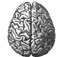 Brain by Samantha Lusher