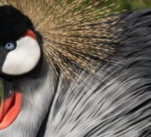 Portrait of an African Grey Crowned Crane Sticker