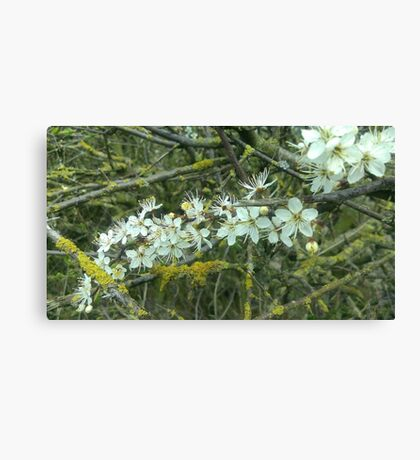 Decayed Blossom Canvas Print