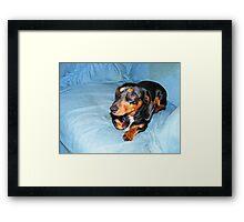 Otis the Dog Framed Print