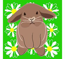 Brown Bunny & Flowers Photographic Print