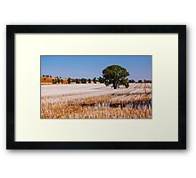Tree in Field  Framed Print
