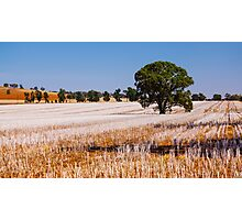 Tree in Field  Photographic Print