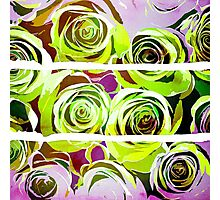 Roses In Green and purple Photographic Print
