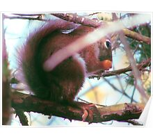 Fall Squirrel Poster