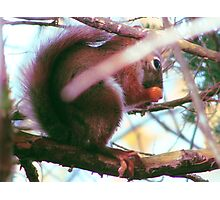Fall Squirrel Photographic Print
