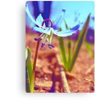 Tiny Blue Wild Flower Canvas Print