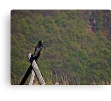 crow on a fence  Canvas Print