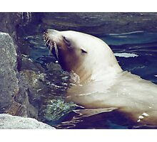 Cute Seal Photographic Print