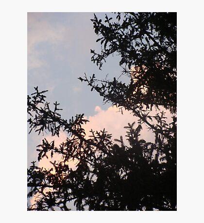 Pine and Sky Photographic Print
