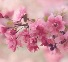 Apple Blossom Beauty by Jessica Jenney