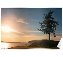 Sunset Tree - Chambers Bay Poster