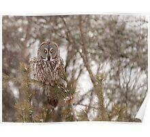 Great Grey Owl in a snow storm Poster