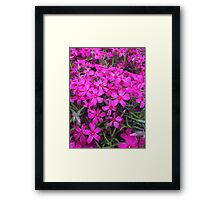 Purple Flower Patch Framed Print