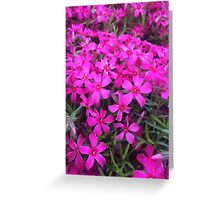 Purple Flower Patch Greeting Card