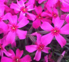 Purple Flower Patch Sticker