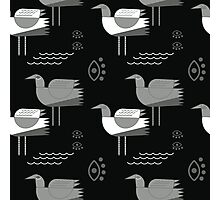 Seagulls and eyes black Photographic Print