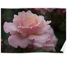 Rose and Rain in Pink Poster