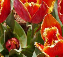 Orange and Yellow Tulips Sticker