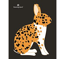 Black Spotted Japanese Rabbit Photographic Print