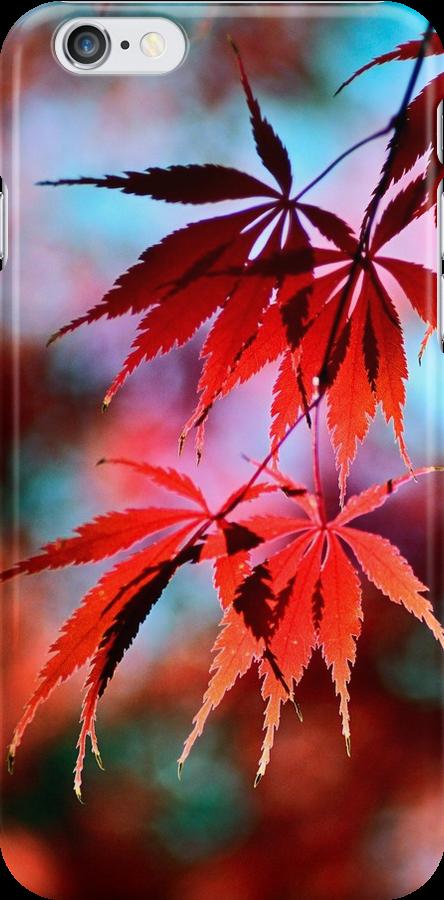 Japanese Red Maple by LudaNayvelt