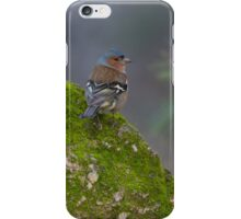 male common chaffinch (Fringilla coelebs) on a rock. iPhone Case/Skin