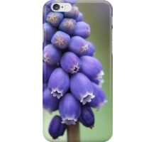 Grape hyacinths  iPhone Case/Skin
