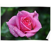 Pink rose #2 Poster