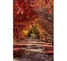 Path of Golden Hues Photographic Print