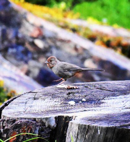 Dancing bird on tree stump Sticker