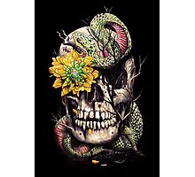 Snake and Skull Photographic Print