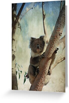 Up a Gum Tree by Elaine Teague