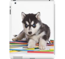 Cute puppy Husky with blue eyes iPad Case/Skin