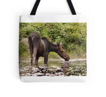 Moose in pond - Algonquin Park Tote Bag