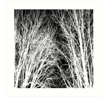 Comely trees 1 Art Print