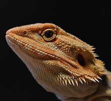 Bearded Dragon by Gavin Dewing