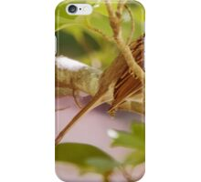 White Throated Sparrow - Nature Print iPhone Case/Skin