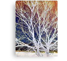 Wintry Mix - Colorful Sky & Shocking White Branches Metal Print