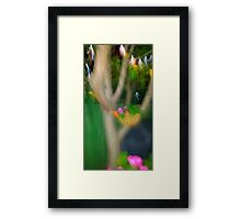 small coloured birds and other pretty parrots Framed Print