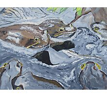 """""""Mating Frogs"""" Photographic Print"""