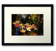 Fallen Leaves On Pond Framed Print