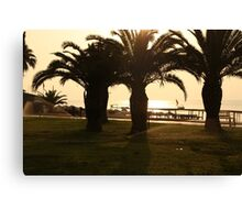 Palm trees and a walking path in a tropical garden  Canvas Print