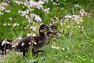 Flower Ducklings by Jo Nijenhuis